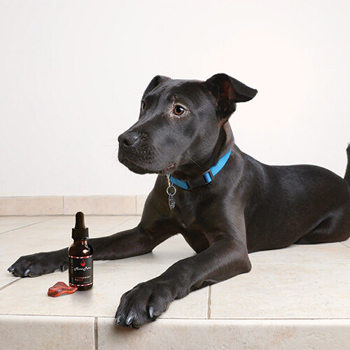 Dog with bacon and tincture